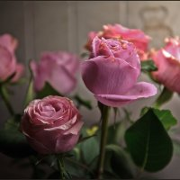 Розы :: Алёна Михеева