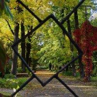 парк :: Анастасия Аверина