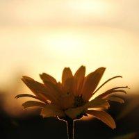 закат с цветком :: Антон Светохин