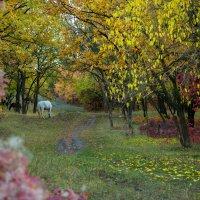 осень :: Кирилл