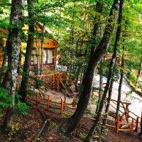 Домик в лесу :: nyura Прокофьева