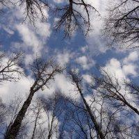 Глядя в небо :: Константин Фролов