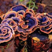 древесные грибочки :: lev makhnev