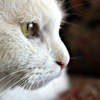Кошка :: Лида Подволоцкая