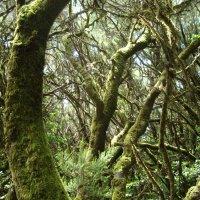Волшебный лес :: Tatiana Sorokina