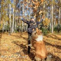 Осень и колли :: Анастасия Колесова