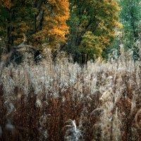 Печаль рассыпают семена трав. :: Ирэна Мазакина