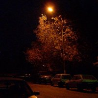 Осенняя ночь. :: Sergey Serebrykov