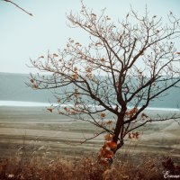 одинокое дерево... :: Елена Михайлова