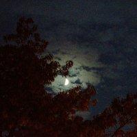 Moon :: Katerina Shelehova