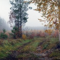 На дорожке, на тропинке растерял листочки лес... :: Александр Чорный