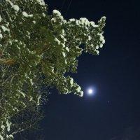 Зимняя луна. :: Ирина Михалева
