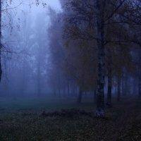парк в тумане :: Сергей Кочнев
