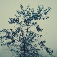 Дерево в тумане... :: Nasty_ Rom.