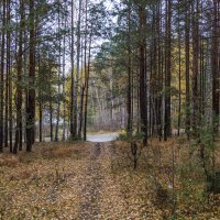 лес :: Алексей. Бордовский