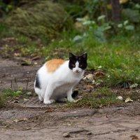 Кошка :: Николай Ловыгин