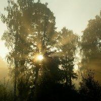 Утро. :: Алексей Пышненко
