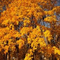 Осень :: Виола Мясникова