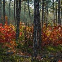Утро в крымском лесу :: Игорь Кузьмин