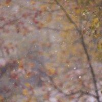 Первый снег :: Вера Арасланова