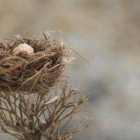 Гнездо :: Вера Арасланова