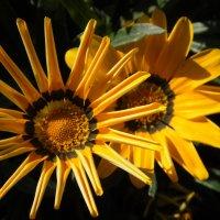 Желтые цветы :: Kate Owl