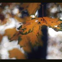 Просто осень, просто листик..... :: Елена Kазак