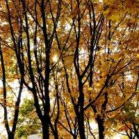 осень :: Ника Донец