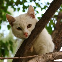 Это-кот. :: Katyazavr Rr.