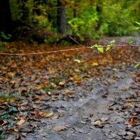 в лесу... :: Дарина Нагорна