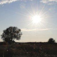 Крымское солнышко :: Полина Дюкарева