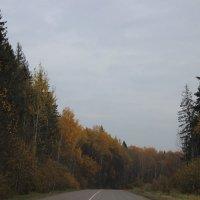 Осень :: Любовь Смыслова
