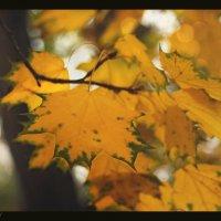 Осенних листьев маскарад..... :: Елена Kазак