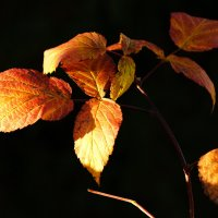 немного солнца на листьях :: Александр Шурпаков
