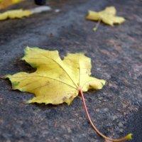 Осенние слезы :: Светлана Захаренко