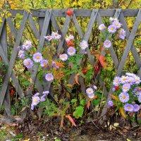 Осенние цветы :: Елена Данилина