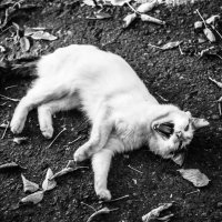 Лесной обитатель ... :: Дмитрий Призрак