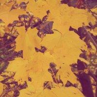 Листья желтые :: Алеся Денежкина