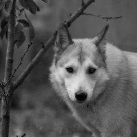 Волк - в глубине души :: Артём Лагутин