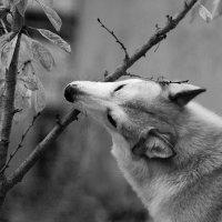 Собака-обгрызака :: Артём Лагутин