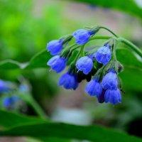 Цветы :: Хон-Гер Ким