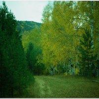 Осень пришла :: Andrey Tsarev