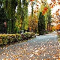 падают листья... :: юрий иванов