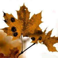 Осень.Бабочки. :: konstantin tatonkin