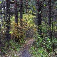 В осеннем лесу :: Александр Садовский