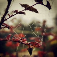 Прикосновение осени :: PersONA Incognito