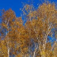 Осень золотая :: Dmitry Muryshkin