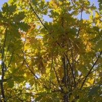 Осенняя тень :: Dmitry Muryshkin