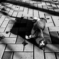 Чеширская Кошка! :: Vadim77755 Коркин