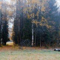 Туман рассевается. :: Валерий Молоток